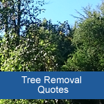 Tree Removal Quotes