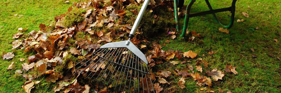 Basic Garden Cleanup and Maintenance