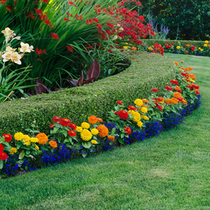 Garden Border Shrubs with Small Hedges